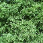 Odporność na mróz – które rośliny przetrwają zimę?