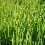 Sposoby na piękny trawnik bez chemii.